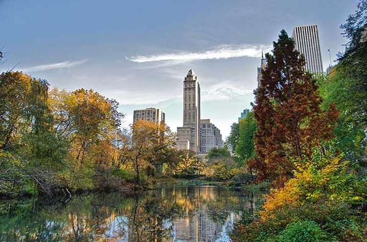 NYC's Central Park Feted as the Most Popular Place in the World to Pop the Question
